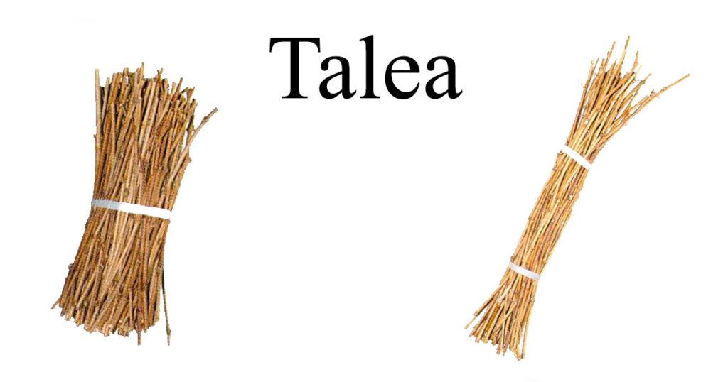 Talea-WP